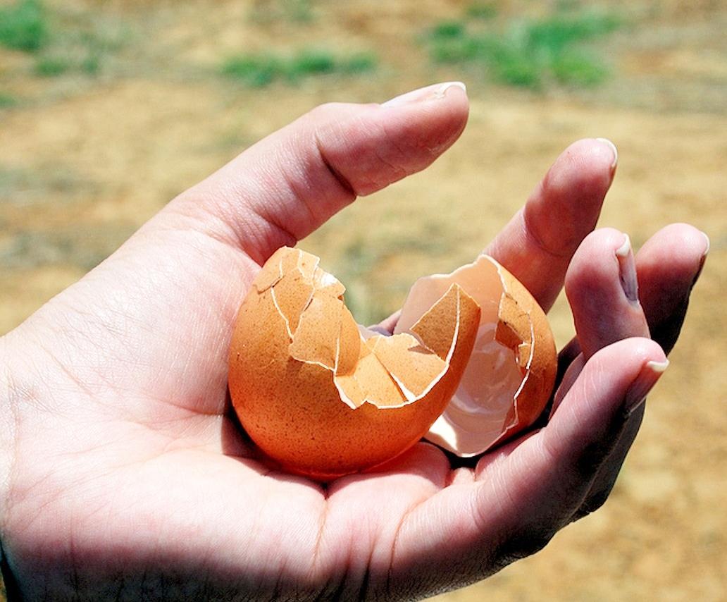 egg shell pixabay